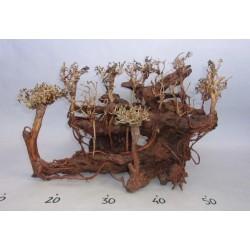 AQUA BONSAÏ FOREST - Taille L