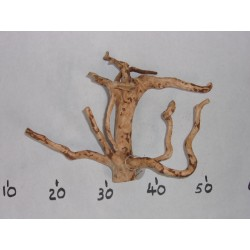BRANCHY DRIFTWOOD - S size