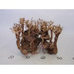 AQUA BONSAÏ FOREST - Taille M