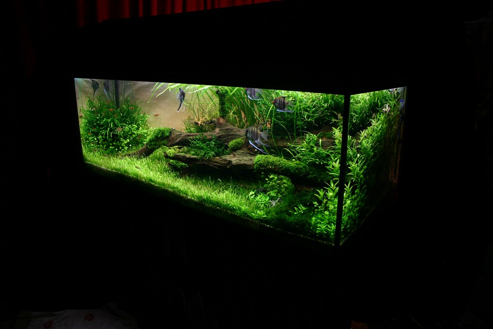 Photo aquarium aquascaping