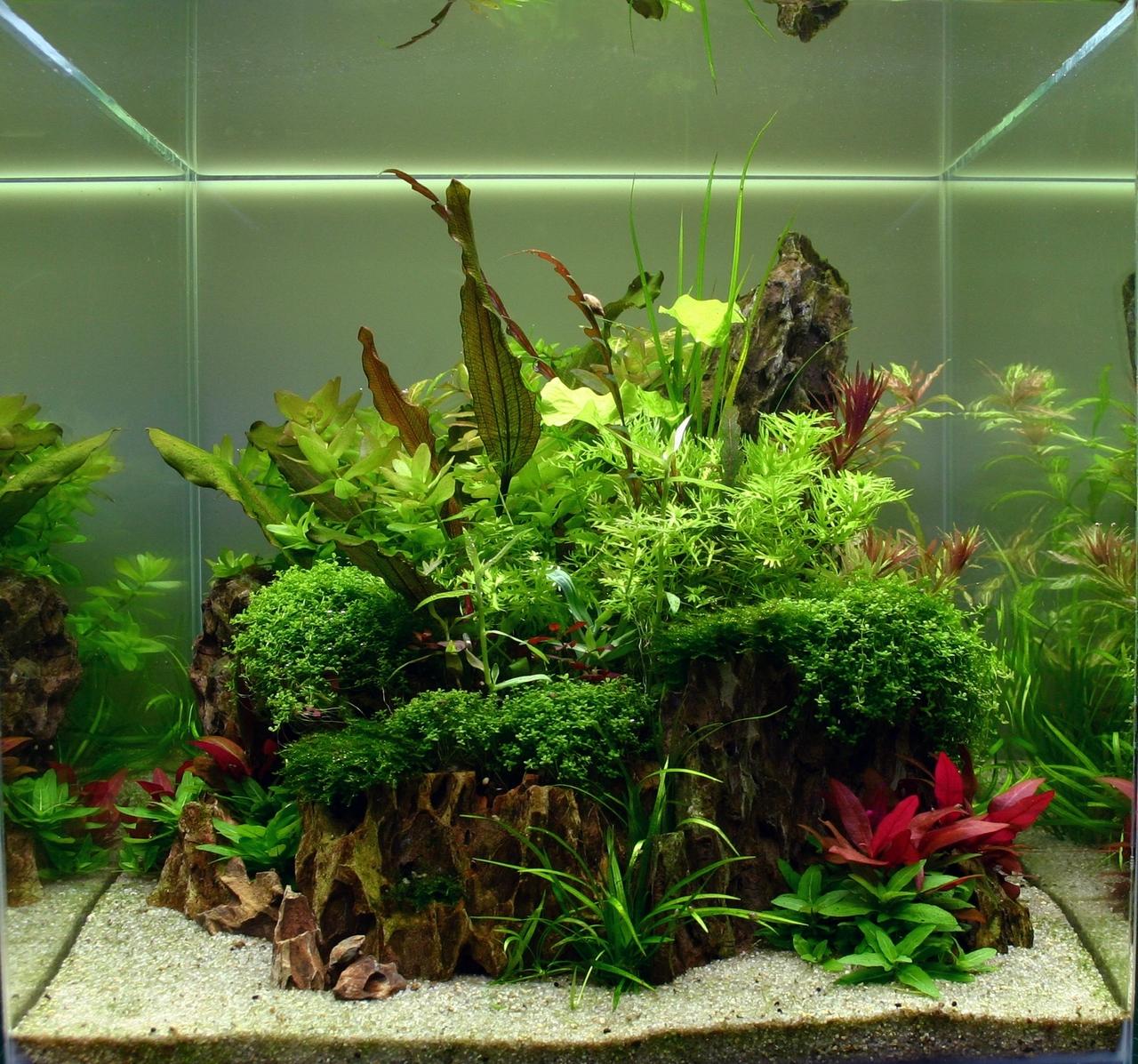 Aquarium cube aquascaping - Aquascape boutique