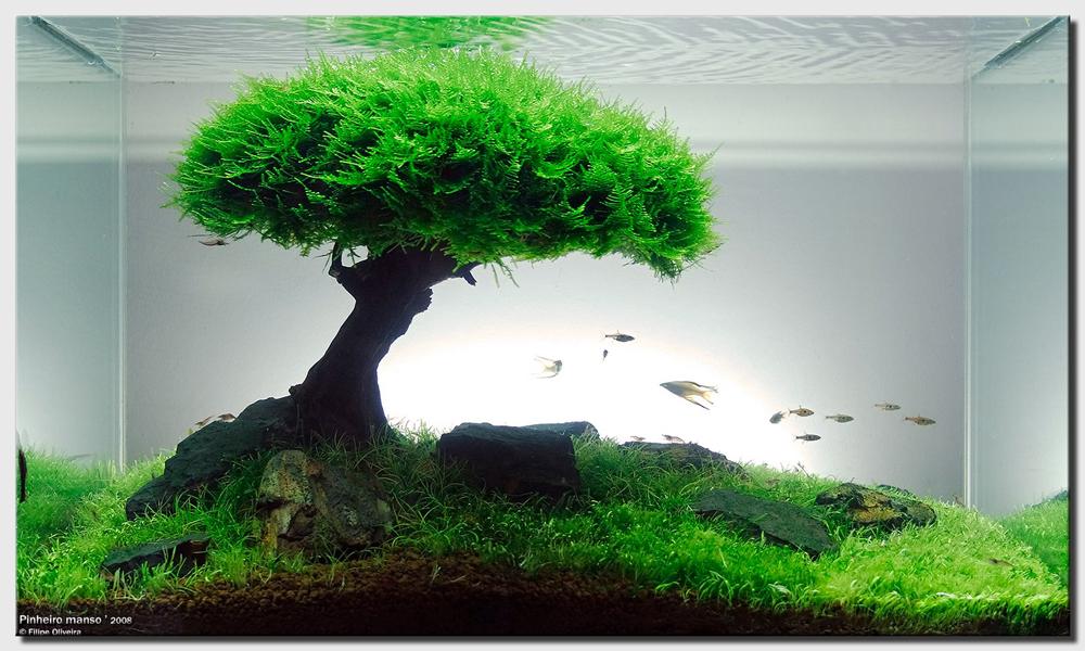 Tree scape par Felipe Oliveira