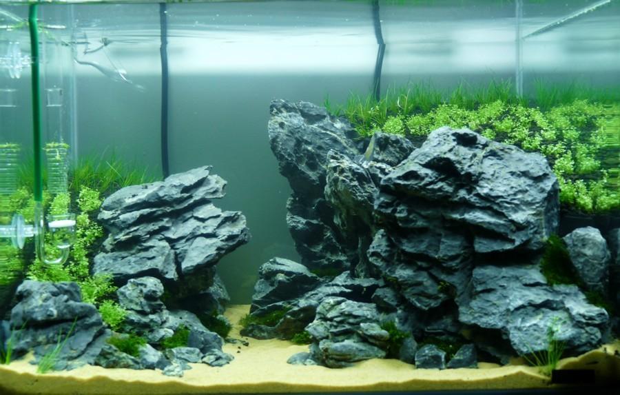 Seiryu stone dans un nano aquarium