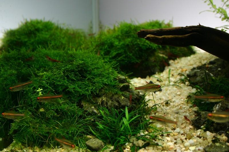 Weeping moss et Keishou stone