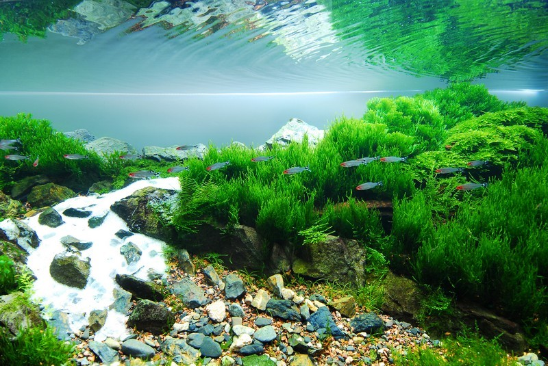 Mousse aquatiques - Gary Wu