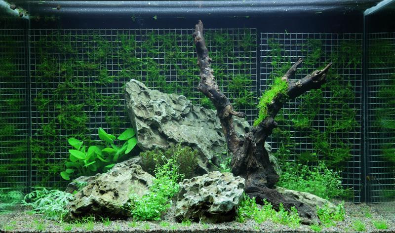 Mur de mousse aquarium
