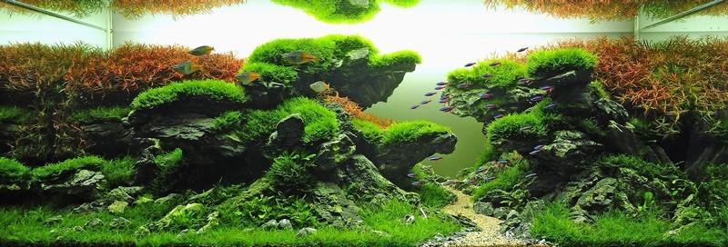 Chemin tortueux dans un aquarium
