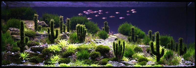 Un désert peuplé de cactus dans un aquarium