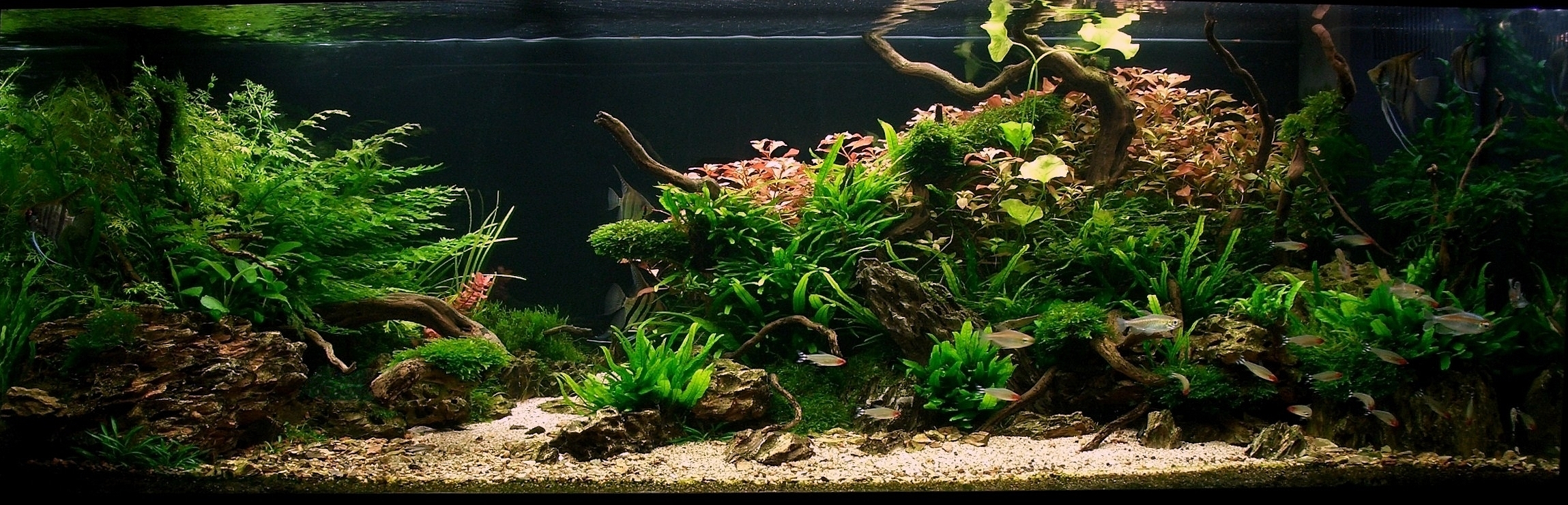 Racines Asia dans un décor d'aquarium