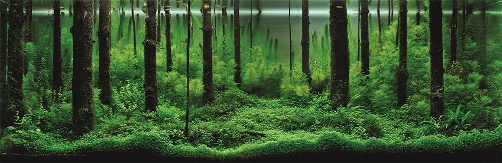 Forêt dans un aquarium, par Pavel Bautin