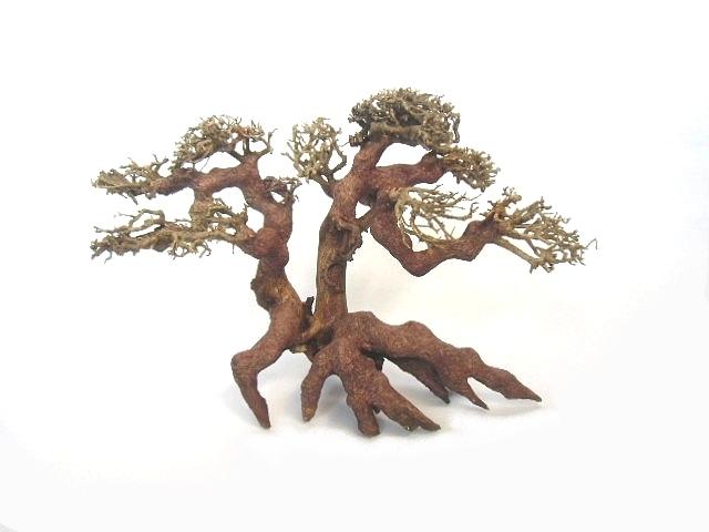 Aqua Bonsaï, un arbre dans un aquarium