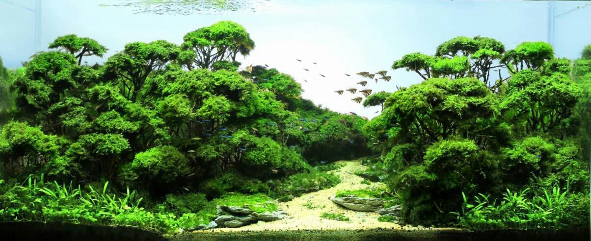 Forest scape par Zhang Jian Feng